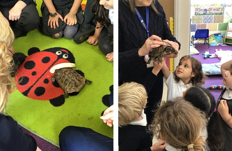 Meeting Percy the Tortoise